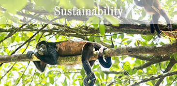 Click here to learn more about Sustainability